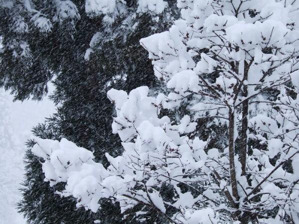 ようやく冬らしくなりました