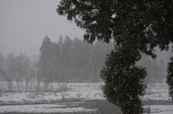 新潟県南魚沼市では荒れた天気になって吹雪いてきました