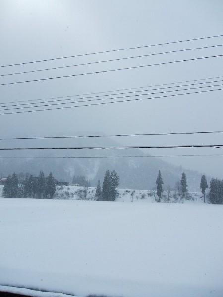 雪がちらほらと舞っています