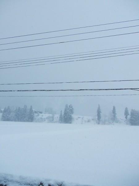 昨晩から10cmくらい雪が降りました