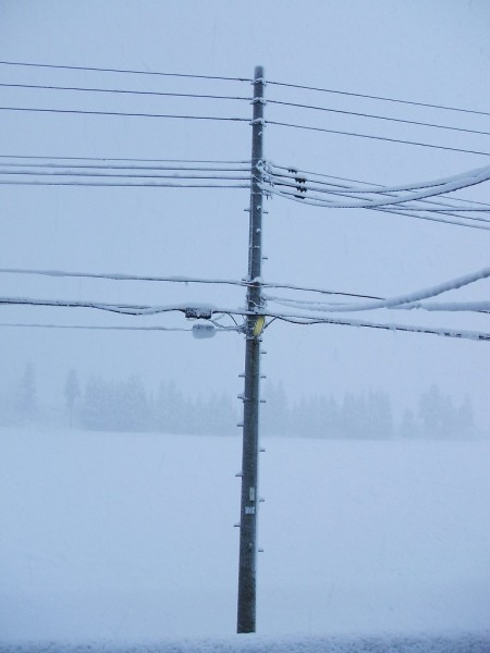 昨晩から今朝にかけて20cmちょっとの雪が積もりました