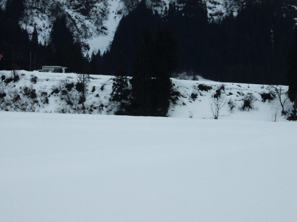 雨で雪解けがまたさらに進みました