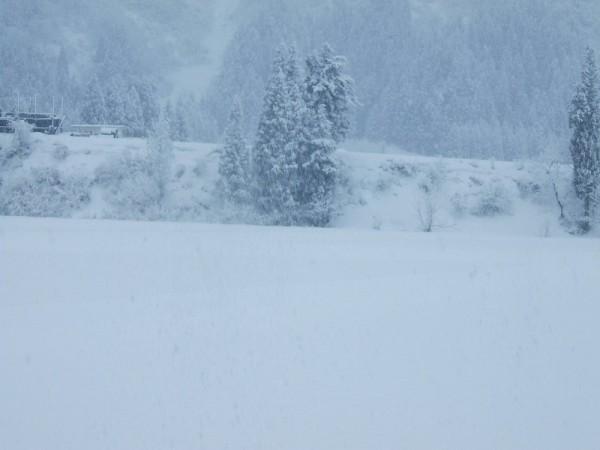 昨晩に10cmくらい雪が降りました