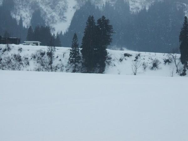 気温は低いですが湿った雪が降っています