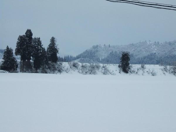 昨晩から数cmの雪が積もりました