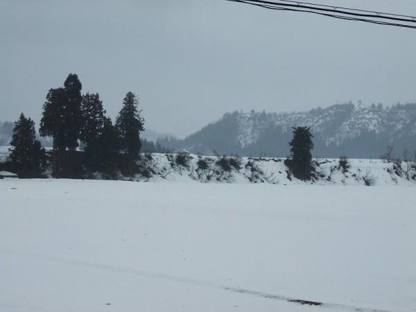 春の風と雨により雪解けがいっきに進んでいます