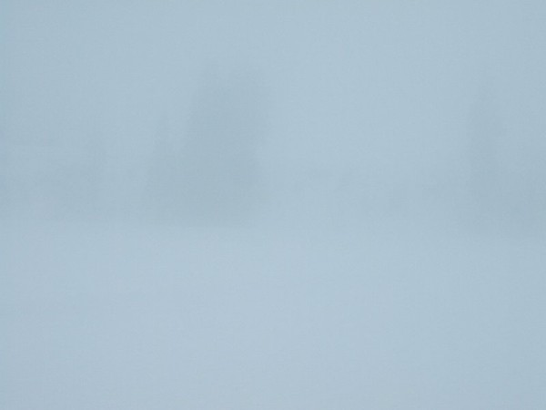 魚沼産コシヒカリの田んぼは霧で覆われています