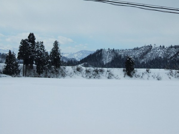 昨晩20cmほど雪が積もりました