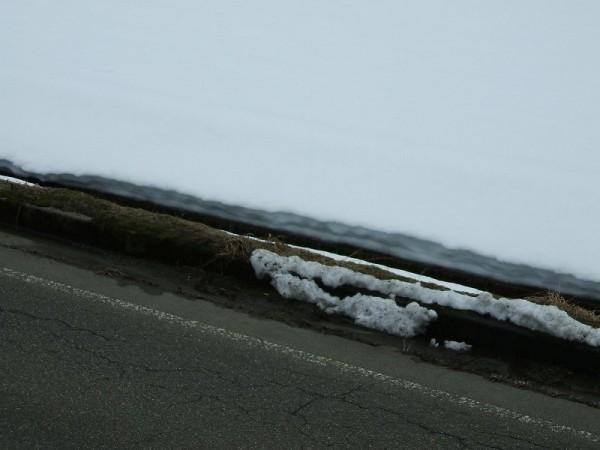 道路脇の雪がほとんど消えました