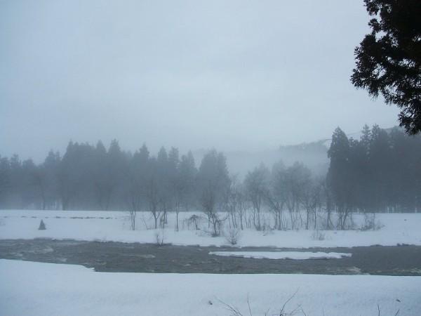 水無川はすっかり春の景色になっています