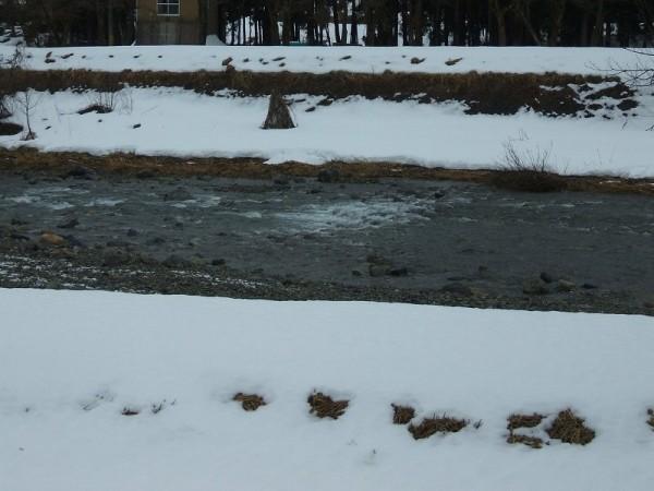 水無川の土手もどんどん見えてきました