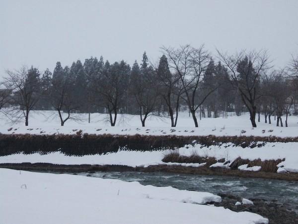 気温は低いのですが、水無川の土手が見えてきていて冬らしさを感じません