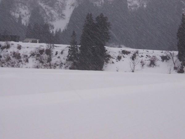 夕方になって雪が降ってきました