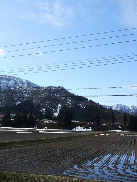 今朝は青空が広がって春らしい天気になっています