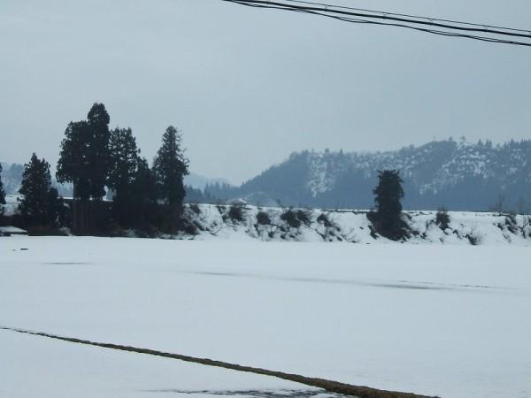 田んぼの土も見えてきました
