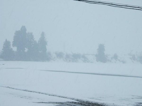 細かい雪が降っています