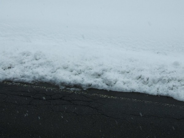 昨晩また雪が降りましたが・・・この時期の雪は消えるのが早いです