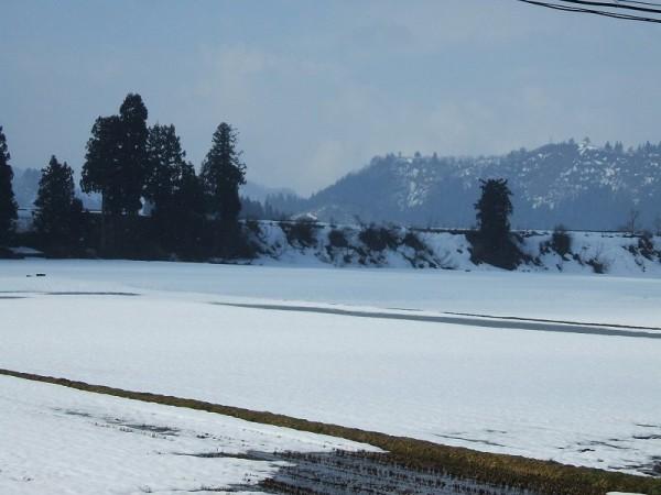 魚沼産コシヒカリの田んぼでは雪解けが進んでいます