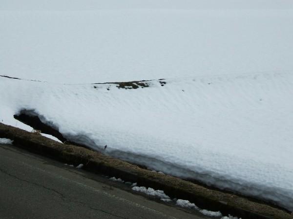 雪が消えて田んぼの畦が出てきました