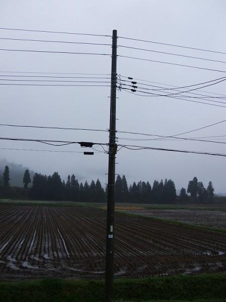 今朝は雨降りです