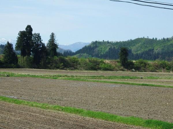 今朝の魚沼は初夏の陽気です