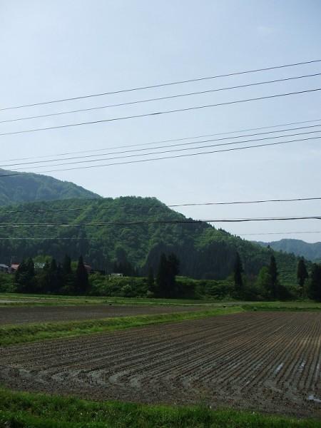 魚沼産コシヒカリの田んぼは朝からいい天気です