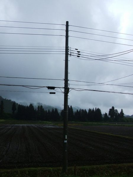 魚沼産コシヒカリの田んぼは雨降りです