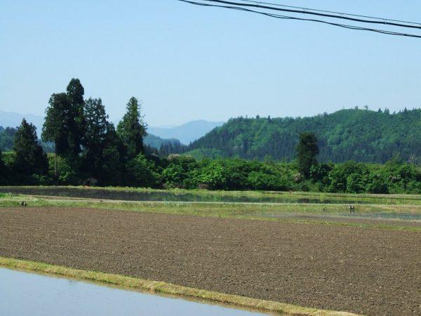 魚沼産コシヒカリの田んぼは澄んだ青空が広がっていい天気です