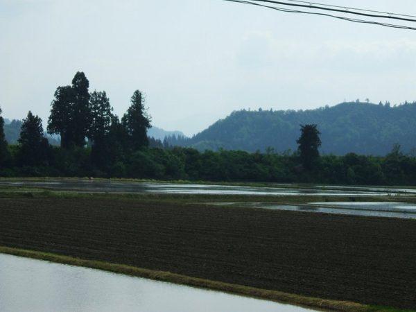 前の田んぼが田植え間近です