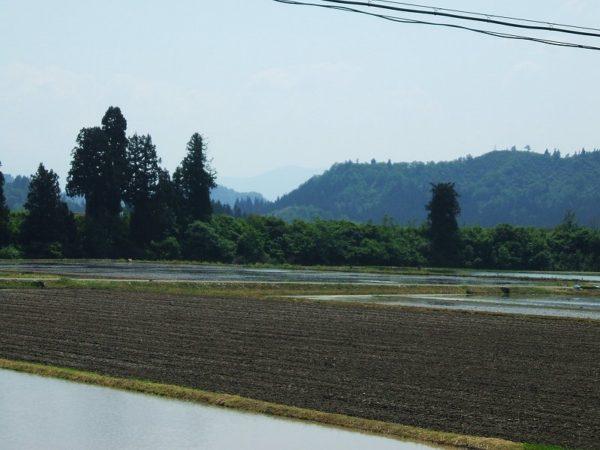 魚沼産コシヒカリの田んぼは青空が広がって農作業日和です