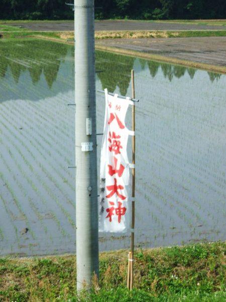 田んぼの脇には八海山大神ののぼり旗が立てられました