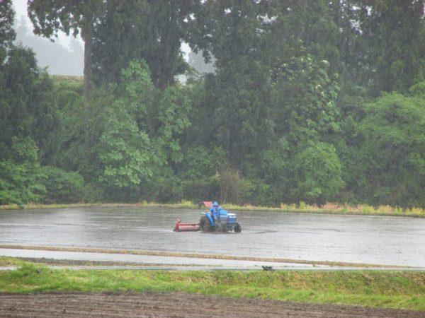 田んぼでトラクターによる代かき作業が行われています