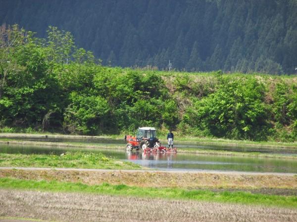 トラクターで代かき作業を行っている田んぼ