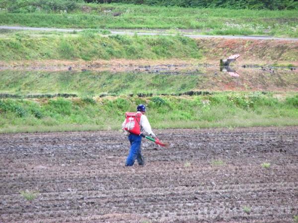 朝早くから田んぼで作業をしている人がいます