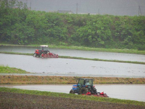 雨の中でトラクターで代かき作業