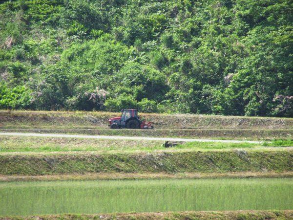 今朝も魚沼産コシヒカリの田んぼはいい天気です