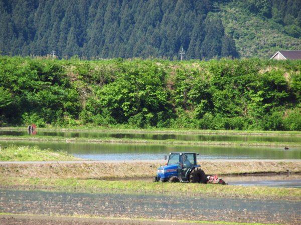 田んぼではトラクターによる代かき作業が行われています