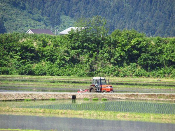 トラクターによる代かき作業