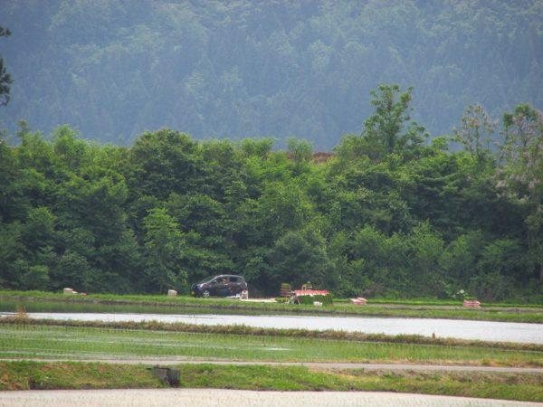 魚沼産コシヒカリの田んぼで田植えが行われています