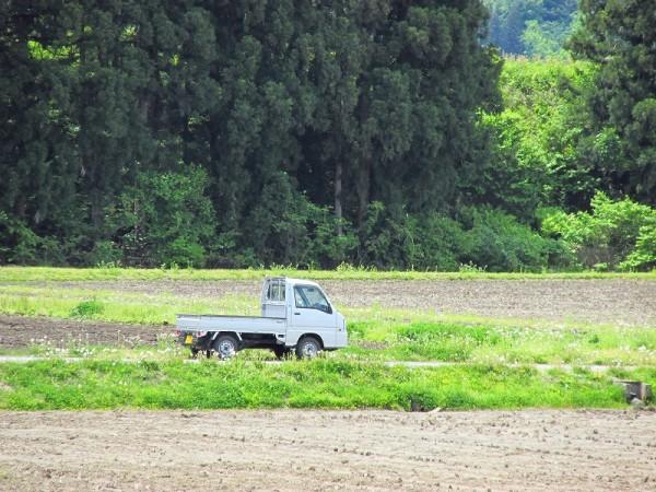 今日も田んぼでトラクター作業が行われています