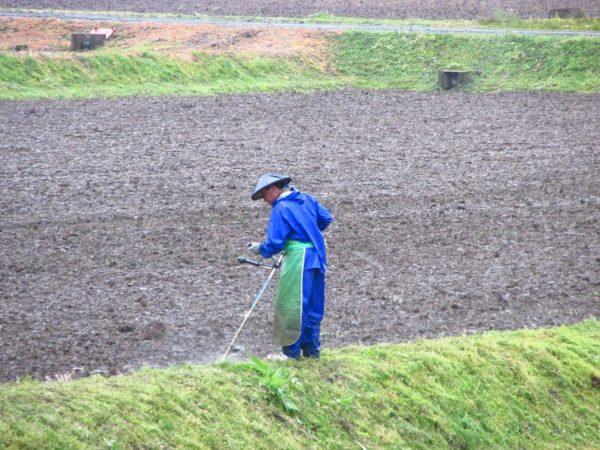 雨の中で草刈り作業