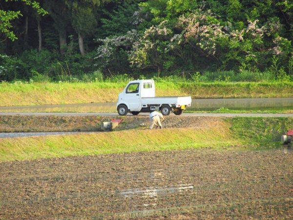 夕方まで農作業が行われています@魚沼産コシヒカリの田んぼ
