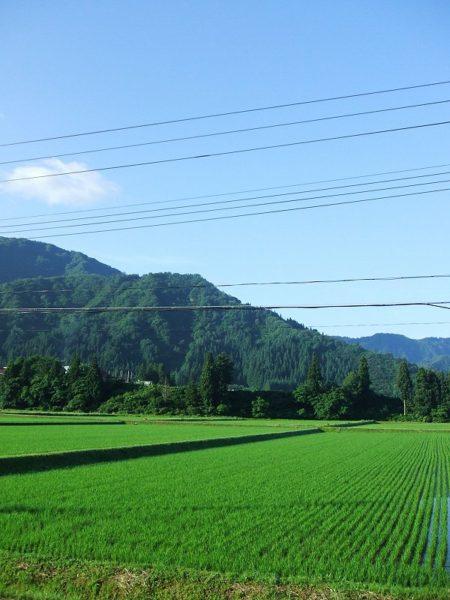 青空が広がって爽やかな朝です
