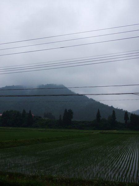 午後になってから雨が降ってきました