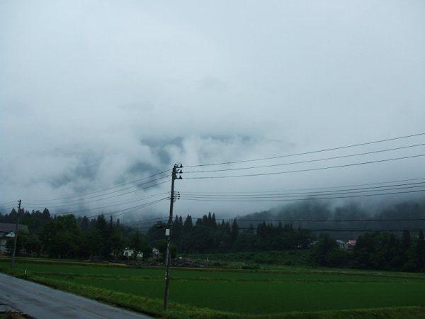 今朝は雨降りで涼しいです