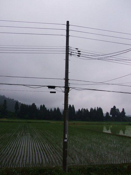 すっかり梅雨時の風景になっています