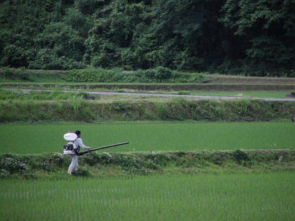 田んぼの畦で作業をしている人