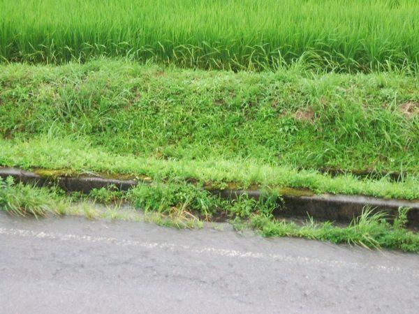 道路に川のように流れる雨水