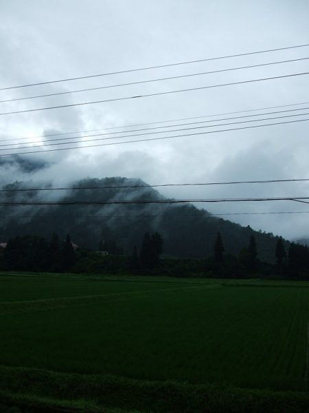 今日もまた雨降りです