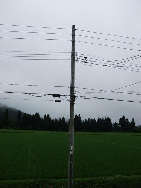 今日も田んぼの向こうの山が霧で覆われています